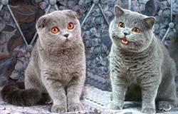 кошек и котят разных пород фото